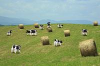 草原と牛  クラフト