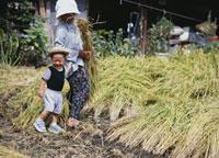 稲の収穫をする祖母と孫