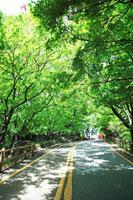 街路樹と道路 韓国