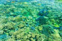 珊瑚の海 フィジー