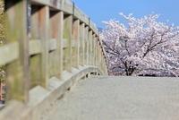 橋と満開の桜 京都府