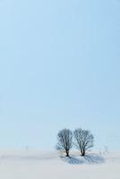 雪原と樹木 美瑛町