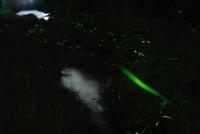 蛍の光 滋賀県