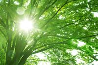 新緑の木と光