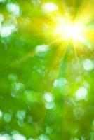 光と新緑のイメージ CG