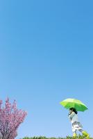 グリーンの傘をさして歩く女の子 青空に桜の木
