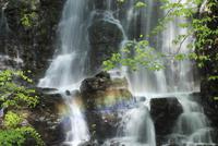 龍双ヶ滝と虹 福井県