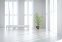 白いベンチチェアと観葉植物が置かれたリビングルーム CG