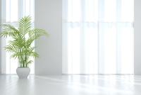 観葉植物が置かれたリビングルーム CG 11019031629| 写真素材・ストックフォト・画像・イラスト素材|アマナイメージズ