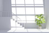 観葉植物が置かれた白い部屋 CG 11019031786| 写真素材・ストックフォト・画像・イラスト素材|アマナイメージズ