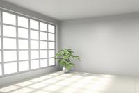 観葉植物が置かれた部屋 CG 11019033145| 写真素材・ストックフォト・画像・イラスト素材|アマナイメージズ