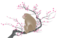 サルと梅の木 イラスト