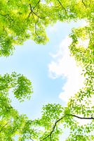 新緑の木々と青空 千葉県
