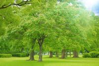 新緑の木々と光 千葉県