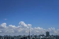 豊島区から望む東京スカイツリーと積乱雲