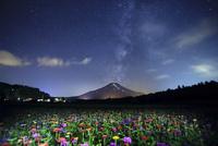 夜の花畑と星空と夏の富士山