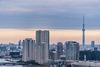 豊洲周辺のビル群と東京スカイツリー