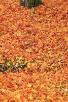 紅葉の落ち葉 東光寺