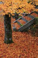 紅葉と落ち葉 東光寺