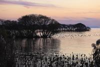琵琶湖畔の夕景 滋賀県