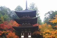 紅葉の西明寺 滋賀県