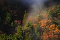朝もやと秋の山 岐阜県