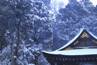雪の日牟禮八幡宮 滋賀県