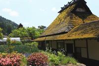 初夏のかやぶきの里 京都