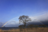 琵琶湖に架かる虹と樹木 滋賀県