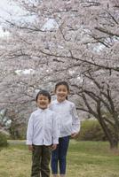 桜の下でほほえむ姉弟 11019038582| 写真素材・ストックフォト・画像・イラスト素材|アマナイメージズ