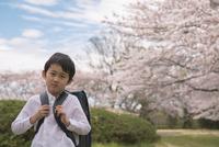 ランドセルを背負った男の子と桜 11019038583| 写真素材・ストックフォト・画像・イラスト素材|アマナイメージズ