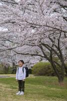 ランドセルを背負った男の子と桜 11019038584| 写真素材・ストックフォト・画像・イラスト素材|アマナイメージズ