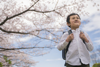 ランドセルを背負った男の子と桜 11019038586| 写真素材・ストックフォト・画像・イラスト素材|アマナイメージズ