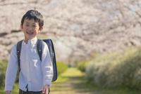 ランドセルを背負った男の子と桜 11019038589| 写真素材・ストックフォト・画像・イラスト素材|アマナイメージズ