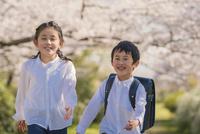桜の下を笑顔で歩く姉弟 11019038592| 写真素材・ストックフォト・画像・イラスト素材|アマナイメージズ