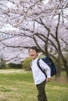 ランドセルを背負った男の子と桜 11019038593| 写真素材・ストックフォト・画像・イラスト素材|アマナイメージズ