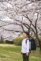 ランドセルを背負った男の子と桜 11019038595| 写真素材・ストックフォト・画像・イラスト素材|アマナイメージズ