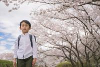 ランドセルを背負った男の子と桜 11019038597| 写真素材・ストックフォト・画像・イラスト素材|アマナイメージズ