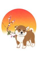 子犬と朝日と梅 イラスト 11019038910| 写真素材・ストックフォト・画像・イラスト素材|アマナイメージズ