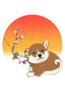 子犬と朝日と梅 イラスト 11019038922| 写真素材・ストックフォト・画像・イラスト素材|アマナイメージズ