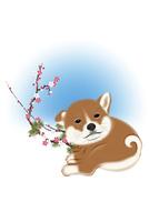 子犬と梅 イラスト 11019038928| 写真素材・ストックフォト・画像・イラスト素材|アマナイメージズ