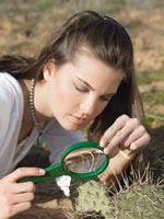 Woman examining cactus