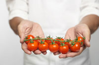 Chef holding tomatoes on vine