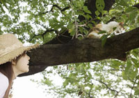 木の上の猫を見つめる女性