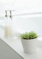 バスルームの観葉植物