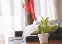 リビングルームの観葉植物と女性