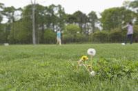 キャッチボール 11023002344| 写真素材・ストックフォト・画像・イラスト素材|アマナイメージズ