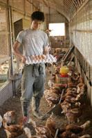 鶏小屋と鶏卵を持つ男性
