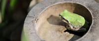 竹株とカエル 11023012745| 写真素材・ストックフォト・画像・イラスト素材|アマナイメージズ