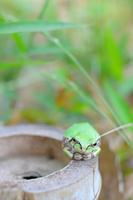 竹株とカエル 11023012754| 写真素材・ストックフォト・画像・イラスト素材|アマナイメージズ